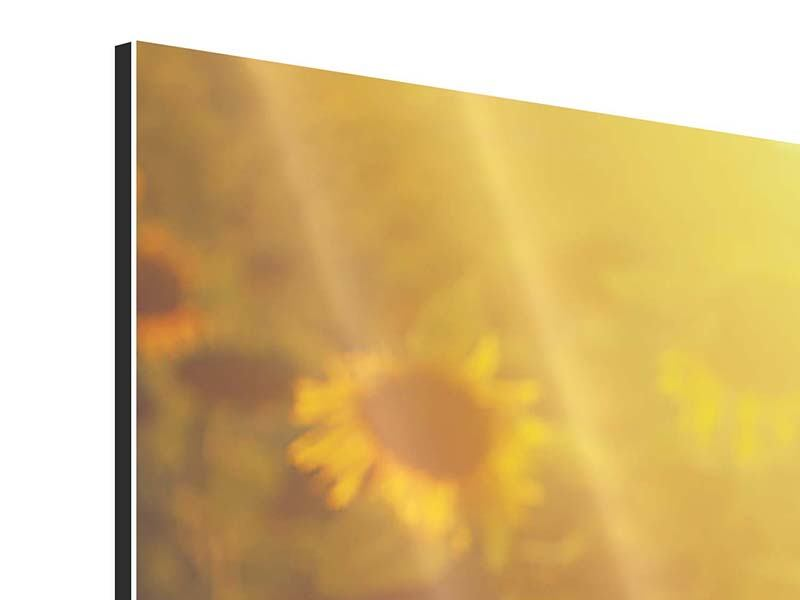 Panorama Aluminiumbild 3-teilig Sonnenblumen im goldenen Licht