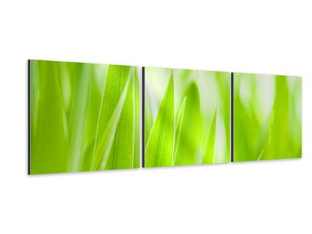 Panorama Aluminiumbild 3-teilig Gras XXL