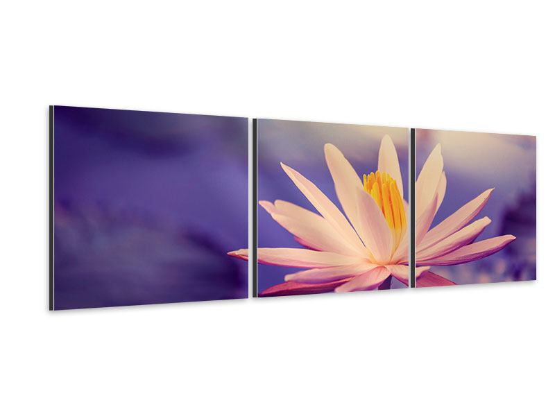 Panorama Aluminiumbild 3-teilig Lotus bei Sonnenuntergang