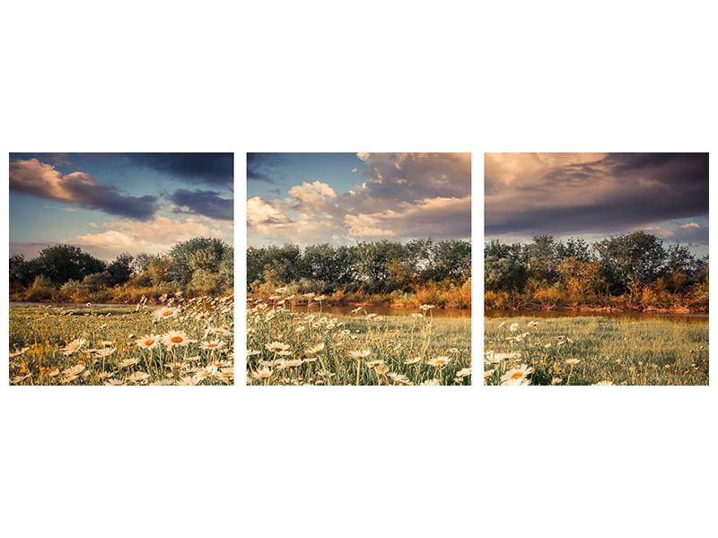 Panorama Aluminiumbild 3-teilig Die Wiesenmargerite am Fluss