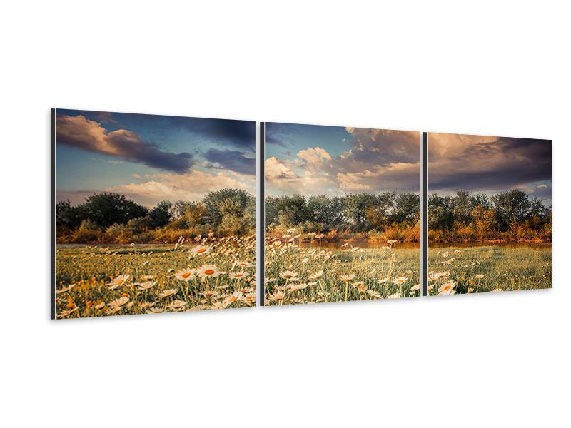 Panoramic 3 Piece Aluminium Print The Ox On The River