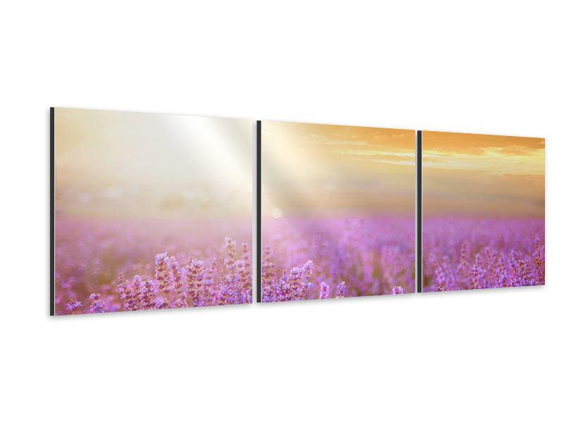 Panorama Aluminiumbild 3-teilig Sonnenuntergang beim Lavendelfeld