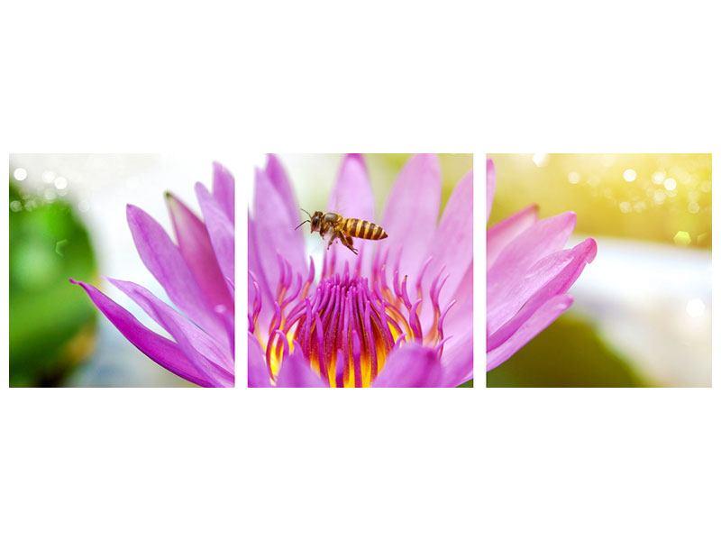 Panorama Aluminiumbild 3-teilig Die Lotus mit Biene