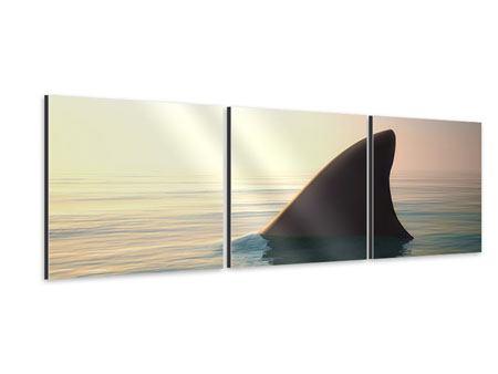 Panorama Aluminiumbild 3-teilig Haifischflosse