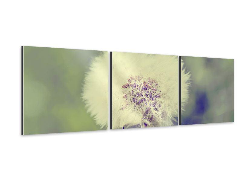 Panorama Aluminiumbild 3-teilig Die Pusteblume