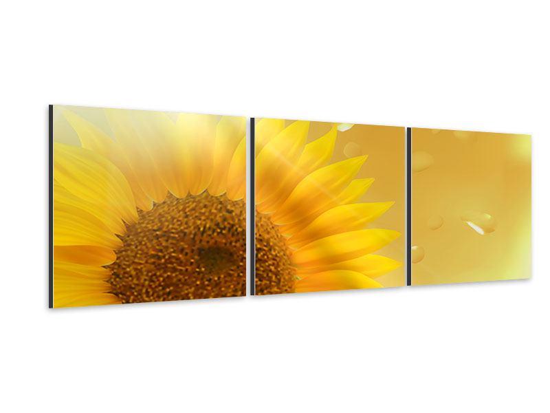 Panorama Aluminiumbild 3-teilig Sonnenblume im Morgentau
