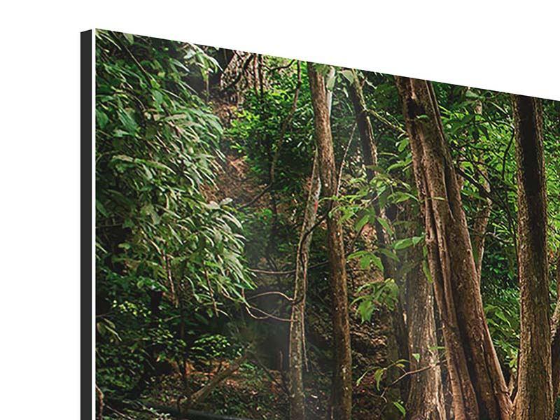 Panorama Aluminiumbild 3-teilig Deep Forest
