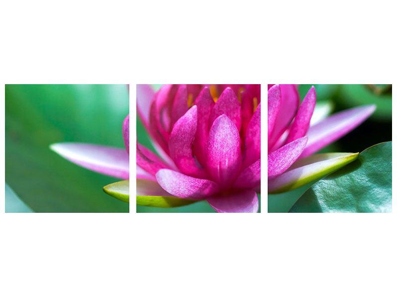 Panorama Aluminiumbild 3-teilig Lotus in Pink