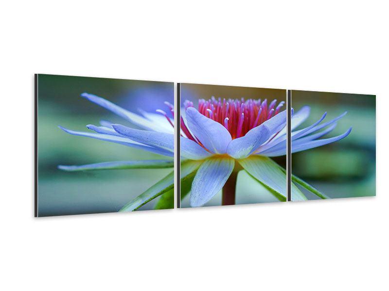 Panorama Aluminiumbild 3-teilig Pretty Lotus