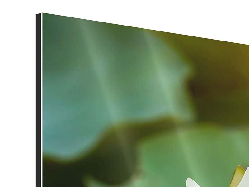 Panorama Aluminiumbild 3-teilig Romantische Seerose