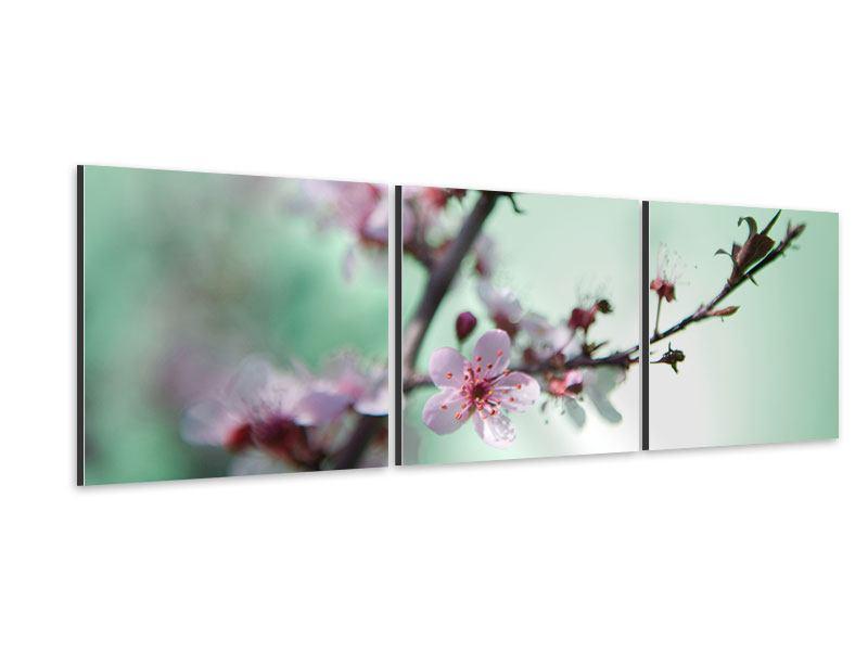 Panorama Aluminiumbild 3-teilig Die japanische Kirschblüte