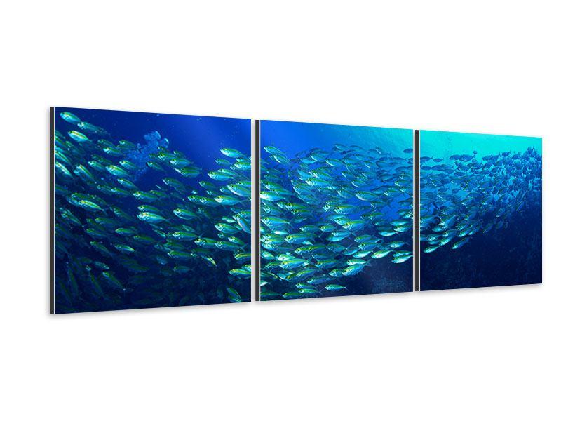 Panorama Aluminiumbild 3-teilig Fischschwarm