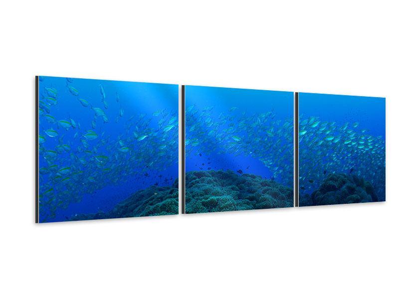 Panorama Aluminiumbild 3-teilig Fischschwärme