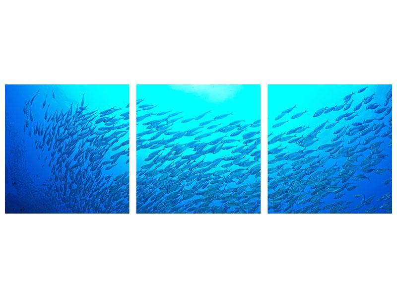 Panorama Aluminiumbild 3-teilig Fischwelt