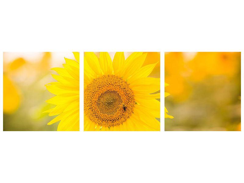 Panorama Aluminiumbild 3-teilig Sunflower