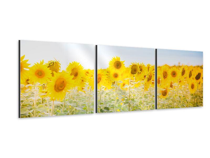 Panorama Aluminiumbild 3-teilig Im Sonnenblumenfeld
