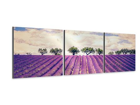 Panorama Aluminiumbild 3-teilig Das Lavendelfeld