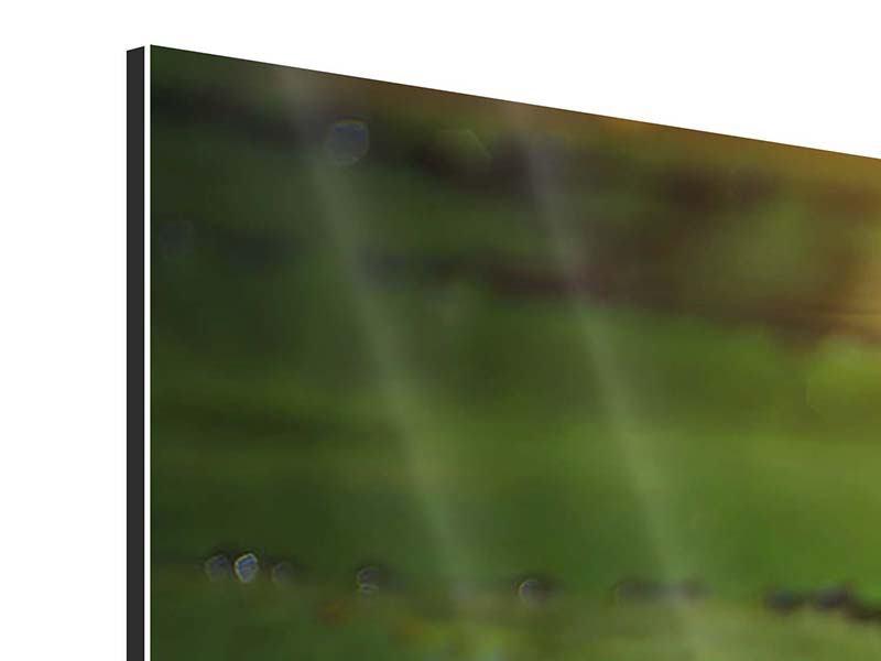 Panorama Aluminiumbild 3-teilig Lilienspiegelung