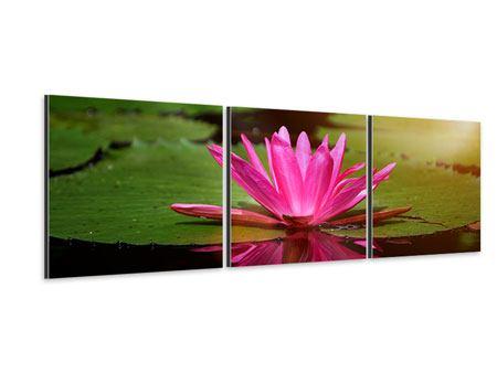 Panorama Aluminiumbild 3-teilig Lotus im Wasser