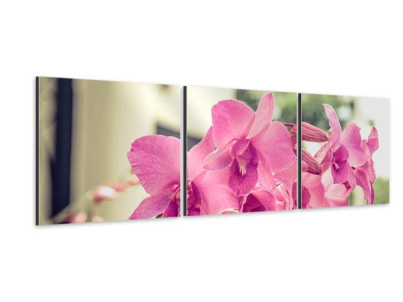 Panorama Aluminiumbild 3-teilig Ein Fensterplatz für die Orchideen