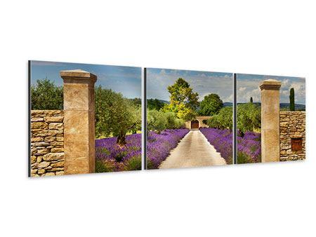 Panorama Aluminiumbild 3-teilig Lavendel-Garten