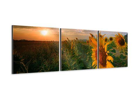Panorama Aluminiumbild 3-teilig Sonnenblumen im Lichtspiel