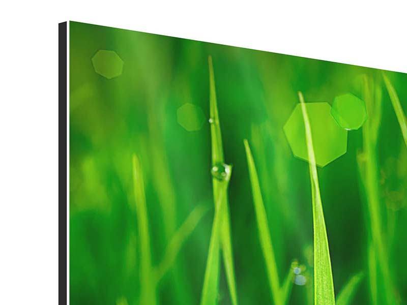 Panorama Aluminiumbild 3-teilig Gras mit Morgentau