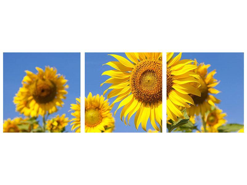Panorama Aluminiumbild 3-teilig Himmlische Sonnenblumen