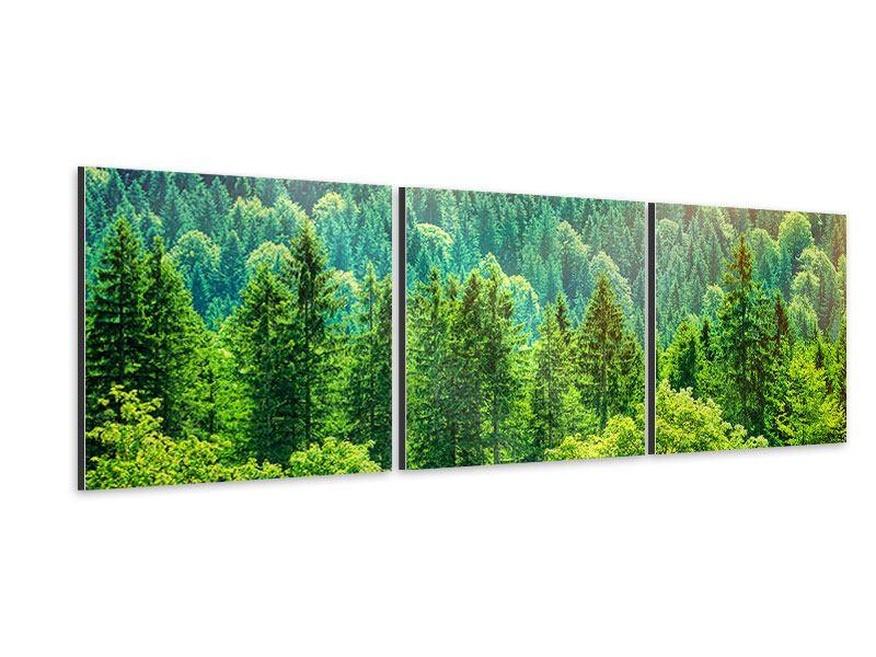 Panorama Aluminiumbild 3-teilig Der Waldhügel