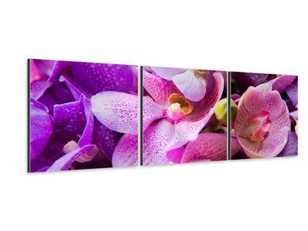 Panorama Aluminiumbild 3-teilig Im Orchideenparadies