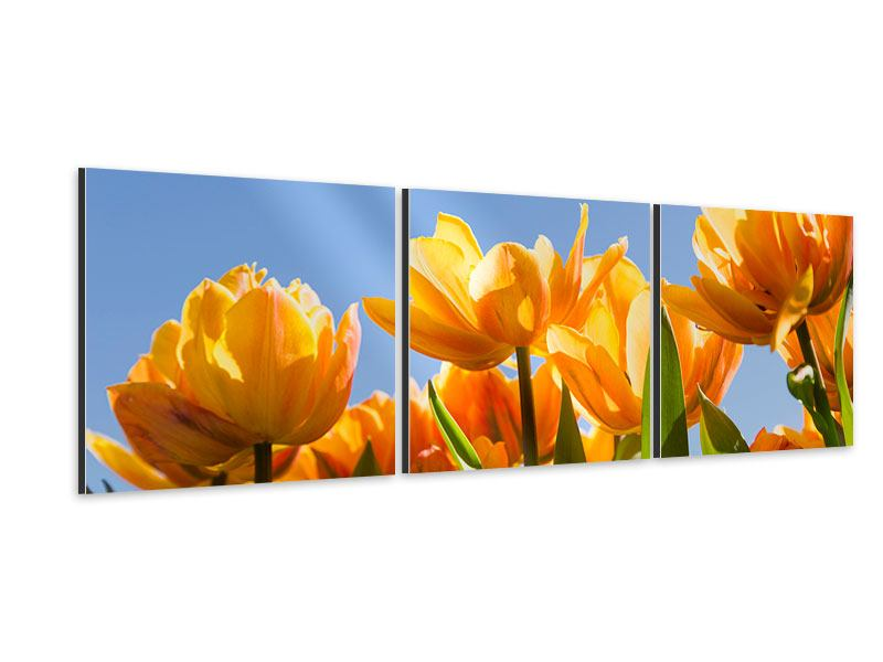 Panorama Aluminiumbild 3-teilig Märchenhafte Tulpen
