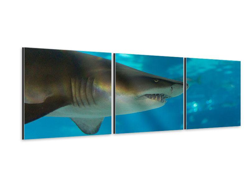 Panorama Aluminiumbild 3-teilig Der Haifisch