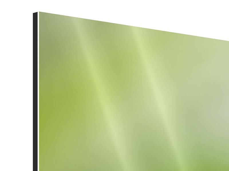 Panorama Aluminiumbild 3-teilig Frosch XXL
