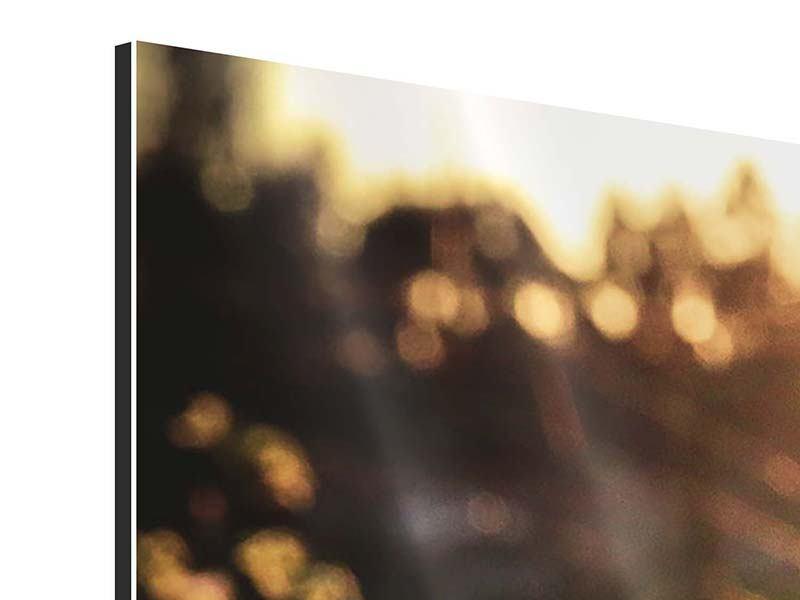 Panorama Aluminiumbild 3-teilig Gänseblümchen bei Sonnenuntergang