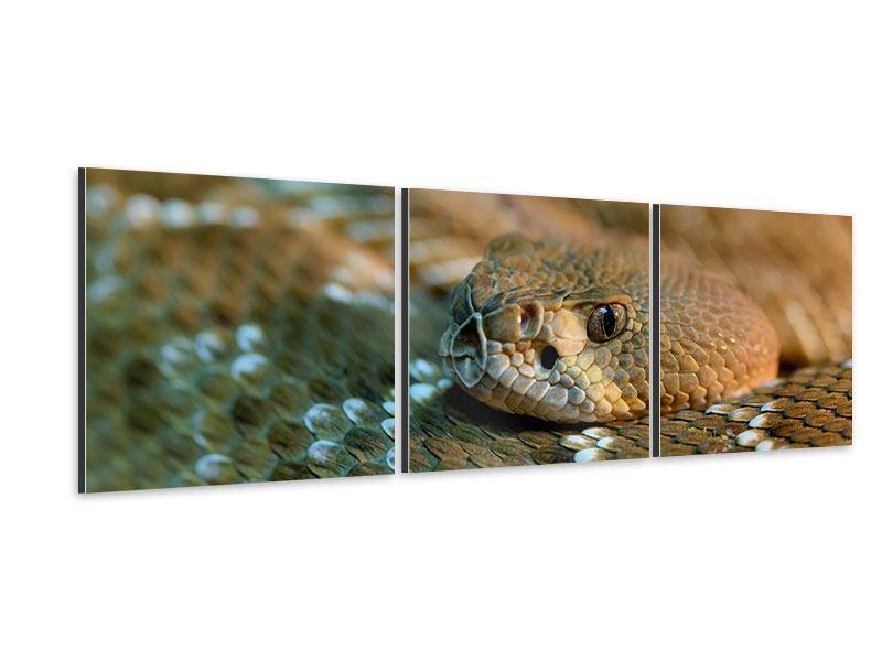 Panorama Aluminiumbild 3-teilig Viper