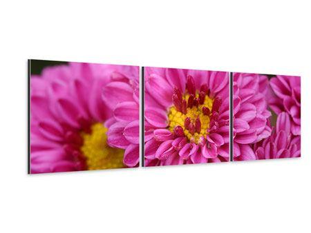 Panorama Aluminiumbild 3-teilig Chrysanthemen