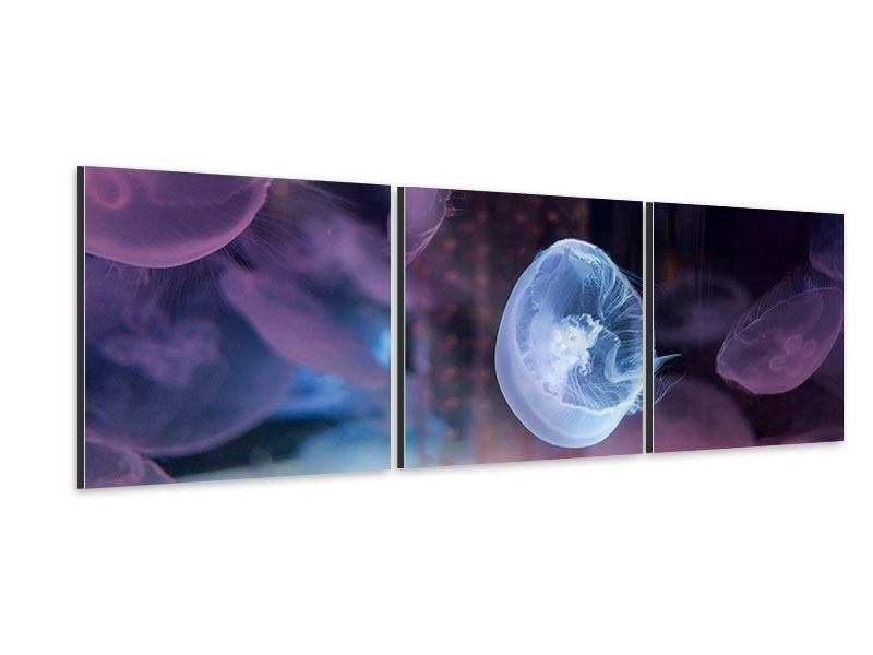 Panorama Aluminiumbild 3-teilig Die Schönheit der Quallen