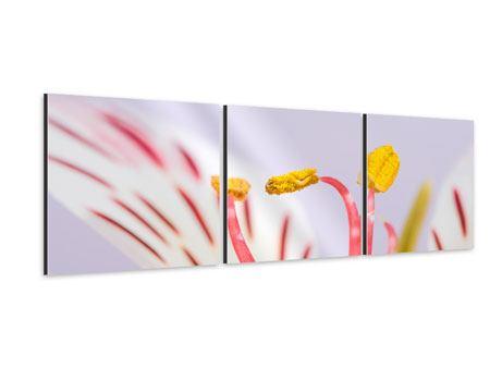 Panorama Aluminiumbild 3-teilig Close Up Die exotische Schönheit