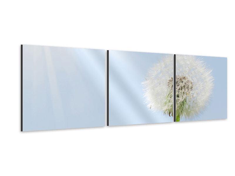 Panorama Aluminiumbild 3-teilig Der Löwenzahn im Sonnenstrahl