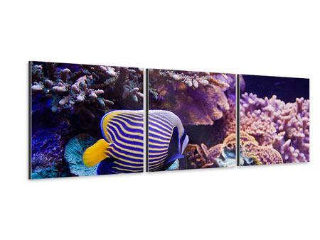 Panorama Aluminiumbild 3-teilig Faszination Unterwasser