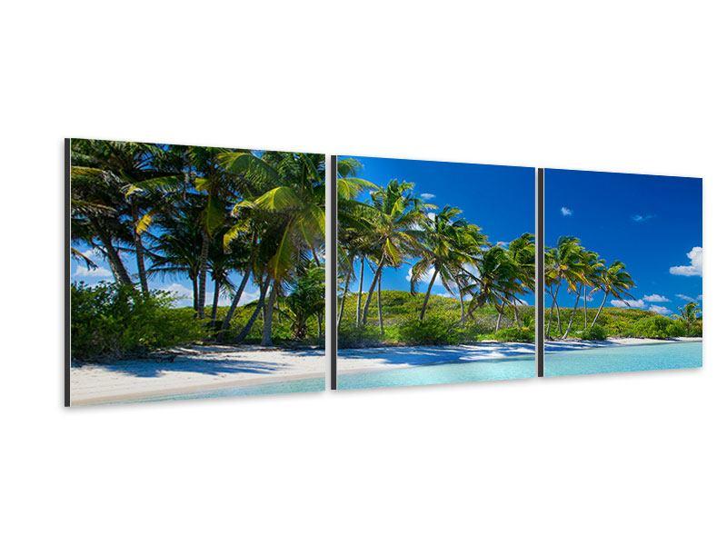 Panorama Aluminiumbild 3-teilig Standpalmen