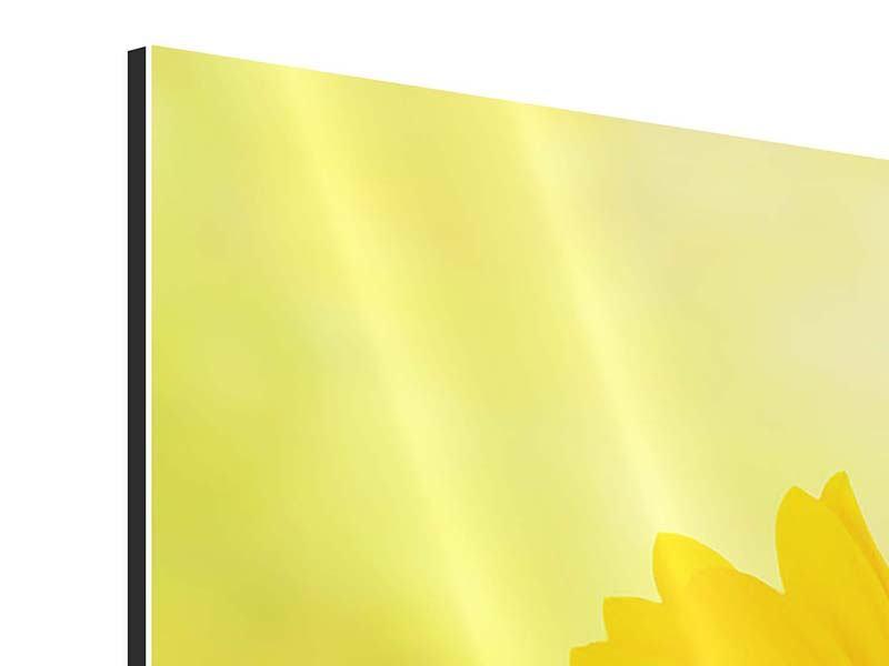 Panorama Aluminiumbild 3-teilig Die Sonnenblume