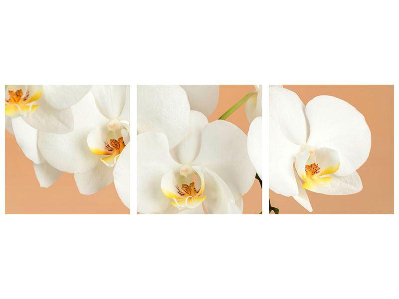 Panorama Aluminiumbild 3-teilig Weisse Orchideenblüten