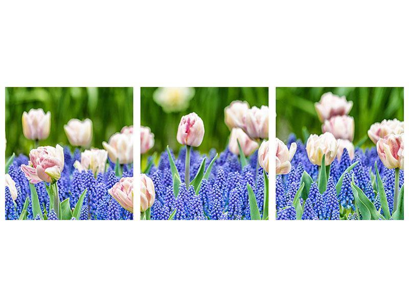 Panorama Aluminiumbild 3-teilig Ein Garten mit Tulpen