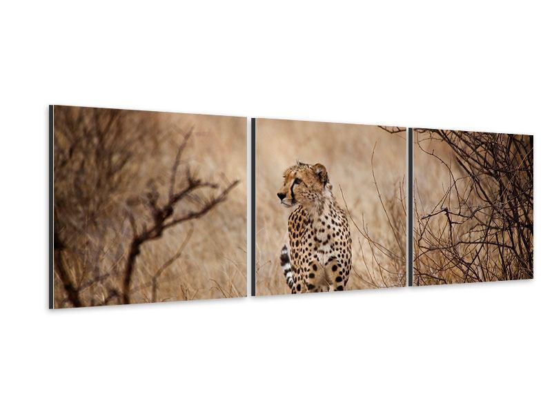 Panorama Aluminiumbild 3-teilig Eleganter Gepard