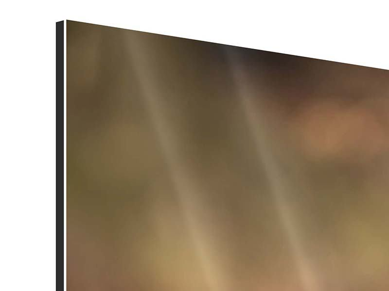 Panorama Aluminiumbild 3-teilig Der Jagdhund