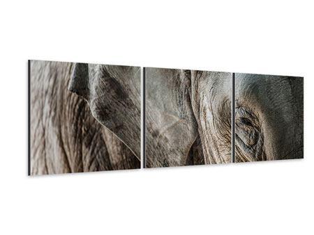 Panorama Aluminiumbild 3-teilig Close Up Elefant