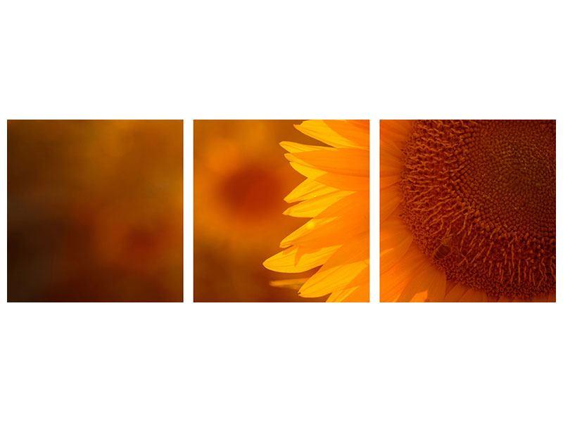 Panorama Aluminiumbild 3-teilig Macro-Sonnenblume