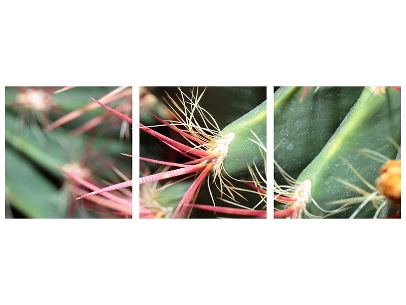 Panorama Aluminiumbild 3-teilig Die Kaktusblüte