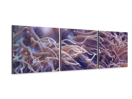 Panorama Aluminiumbild 3-teilig Korallenriff
